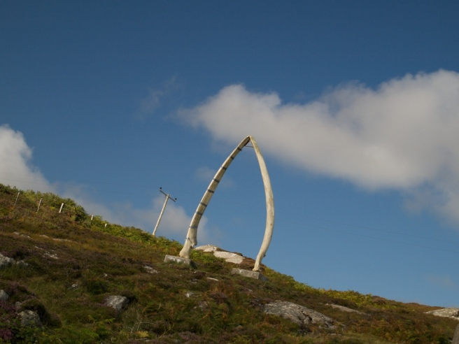 Coll Whalebone  025