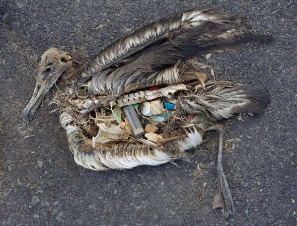 birdfullofplastic