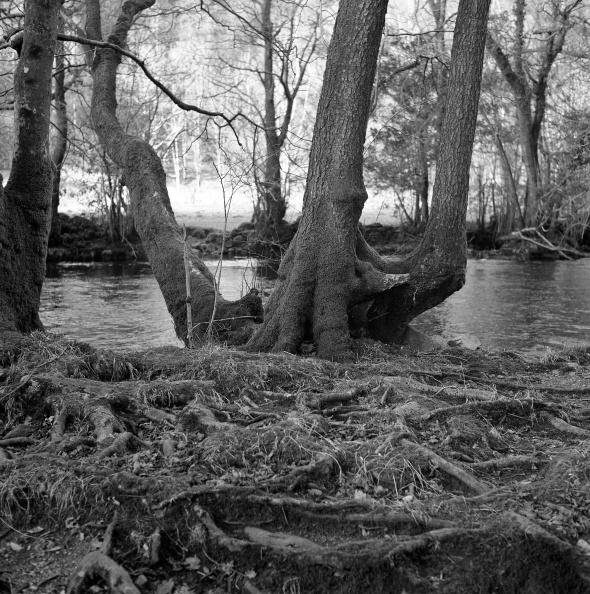 Woods near Rydal, Ilford HP5 400